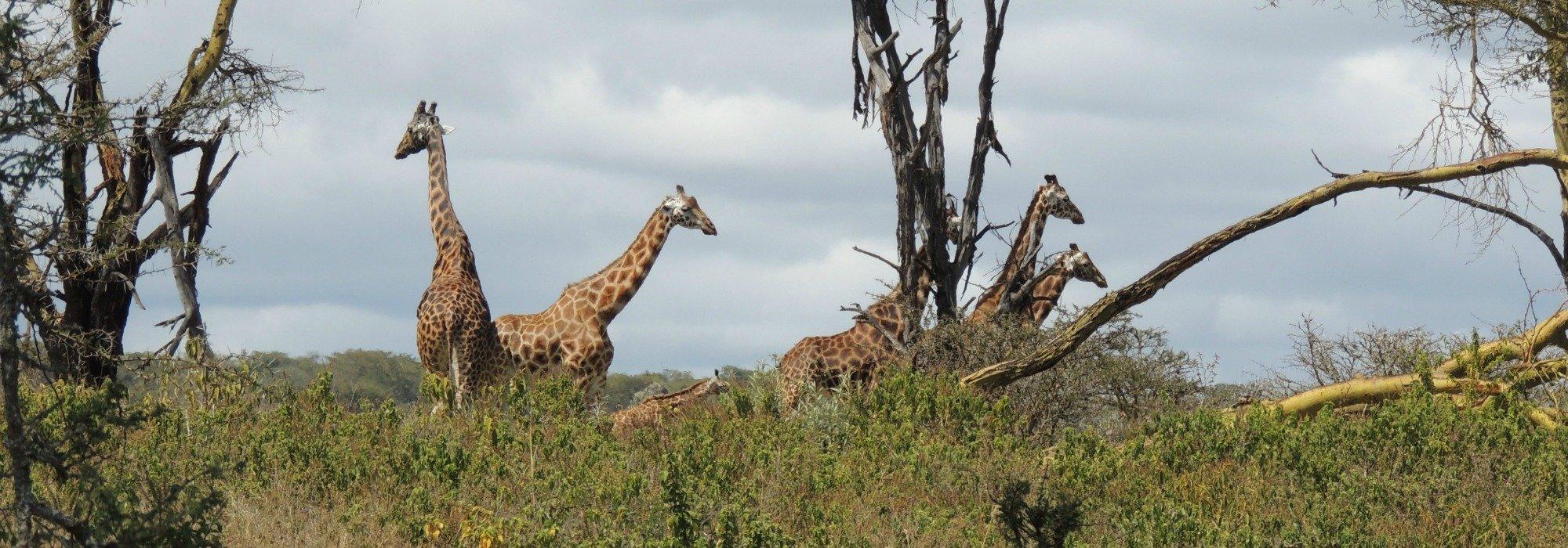 Zambian Safari