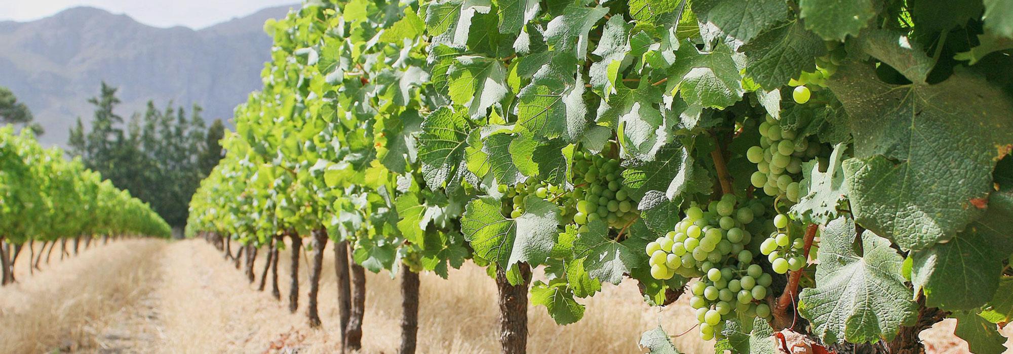 Explore Cape Town and the Wine Region